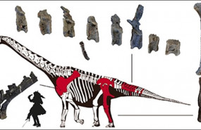 ep paleontologos espanoles descubrennueva especiedinosaurio sauropodoportugal
