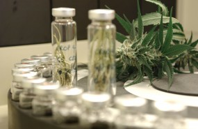 Cannabis drugs for medical use