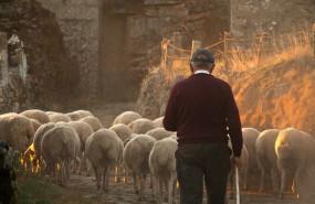 ep archivo - pastor con sus ovejas