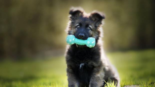 1629441911 cachorro de perro grande